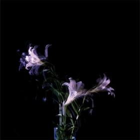 a flower 013. pigment print. 100x100cm. 2011